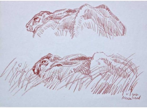 Boensch-Stefan-Crouched-Hare.jpg