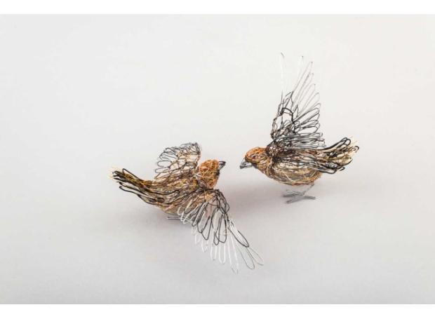 Drury-Beverley-Hawfinch-courtship.jpg