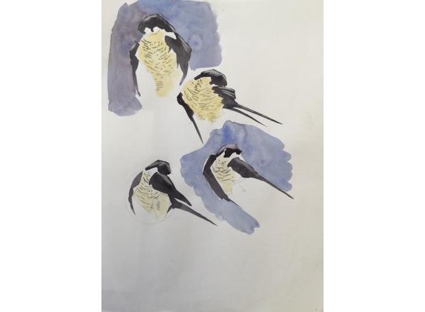 Gibbons-Martin-Peregrine-Falcon.jpg