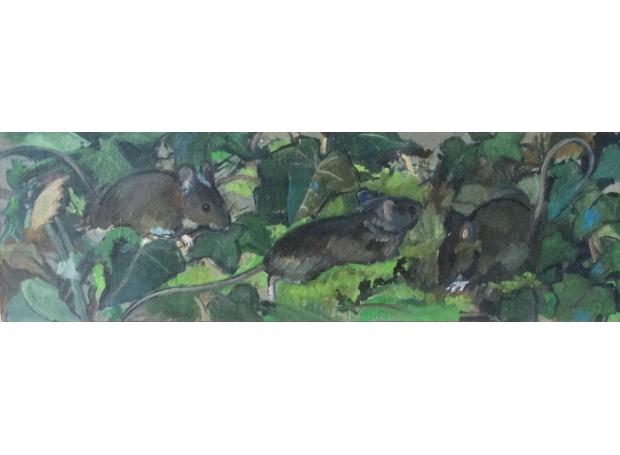 Kuhfeld-Cathryn-Wood Mice in the undergrowth.jpg
