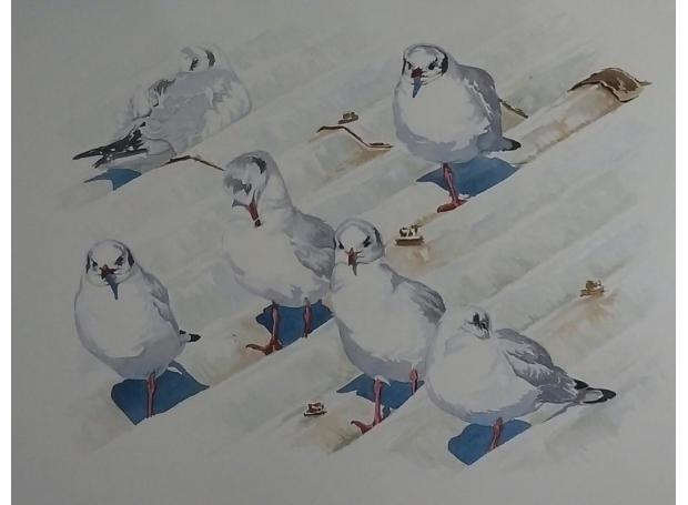 Rendall-Ian-Roosting Black-headed Gulls.jpg