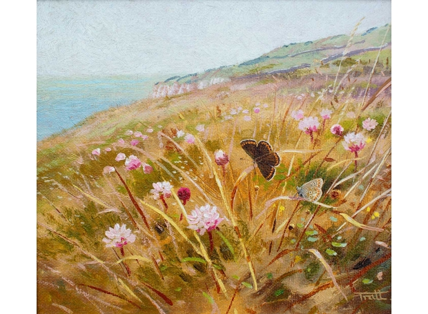 Tratt-Richard-The-Brown-Argus-Dorset-coast.jpg