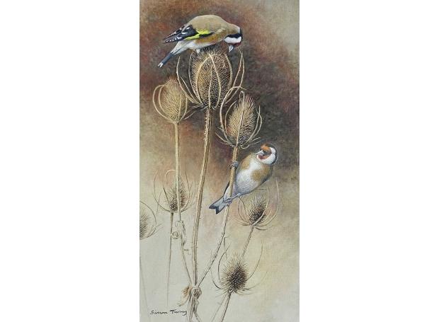 Turvey-Simon-Goldfinches.jpg