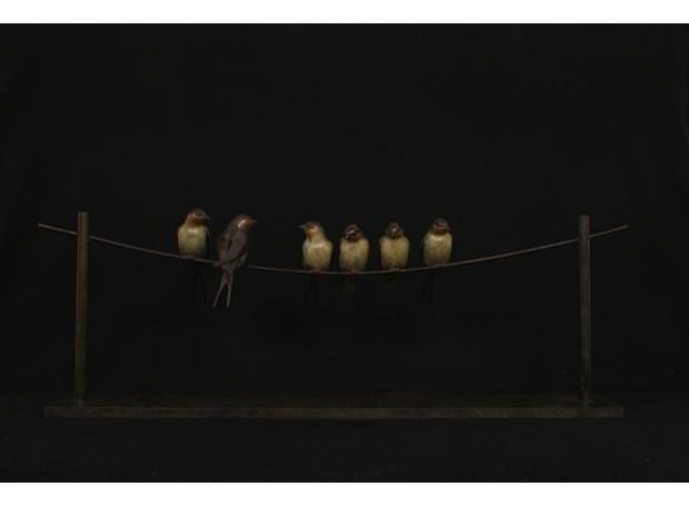 Binder-Adam-Swallows 2.jpg