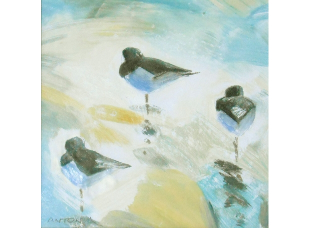 Phillips-Antonia-oystercatcher-trio.jpg