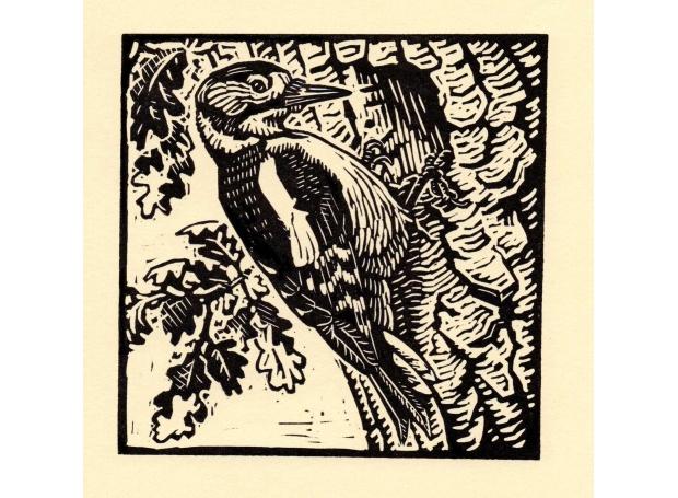 Allen-Richard-Great-Spotted-Woodpecker.jpg