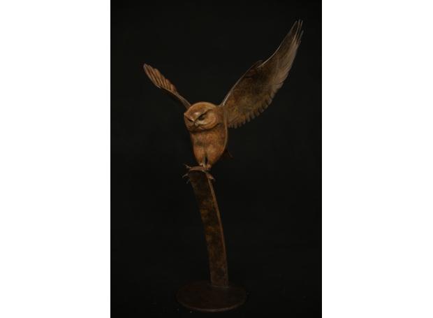 Binder-Adam-Little Owl.jpg