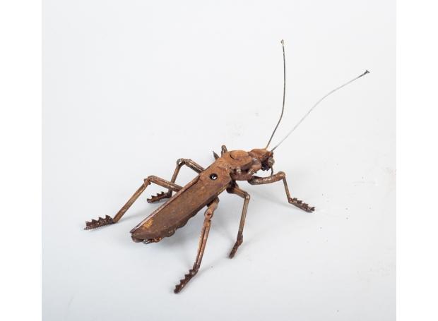 Soldier Beetle 6.jpg