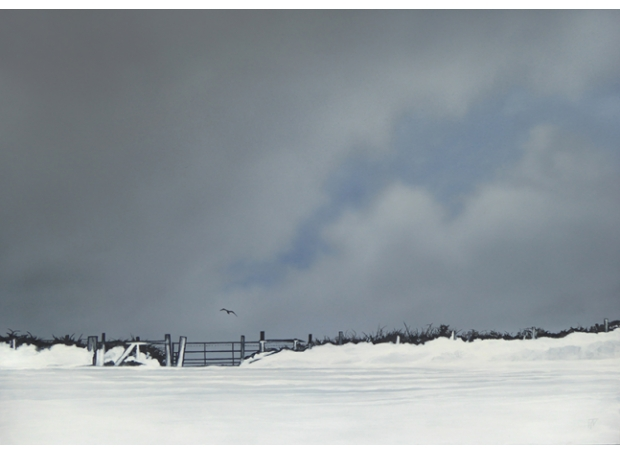 Watts-Terry-Hedge in snow.jpg