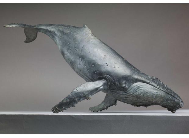 Web-Humpback_Whale_Extra_04.jpg