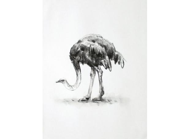 Lucie-Geffré-Ostrich.jpg