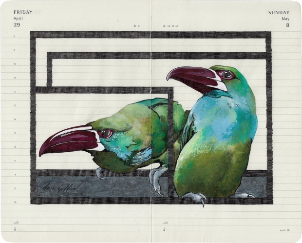 Giffard.Fran_.Crimson Rumped Toucanet.2012. graphite pencil, aquarelle, 21by26cm.jpg