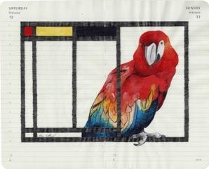 Scarlet Macaw, Fran Giffard.jpeg