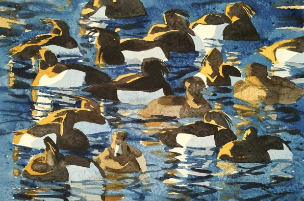 Woodhams-Ben-Tufted-Ducks.jpg