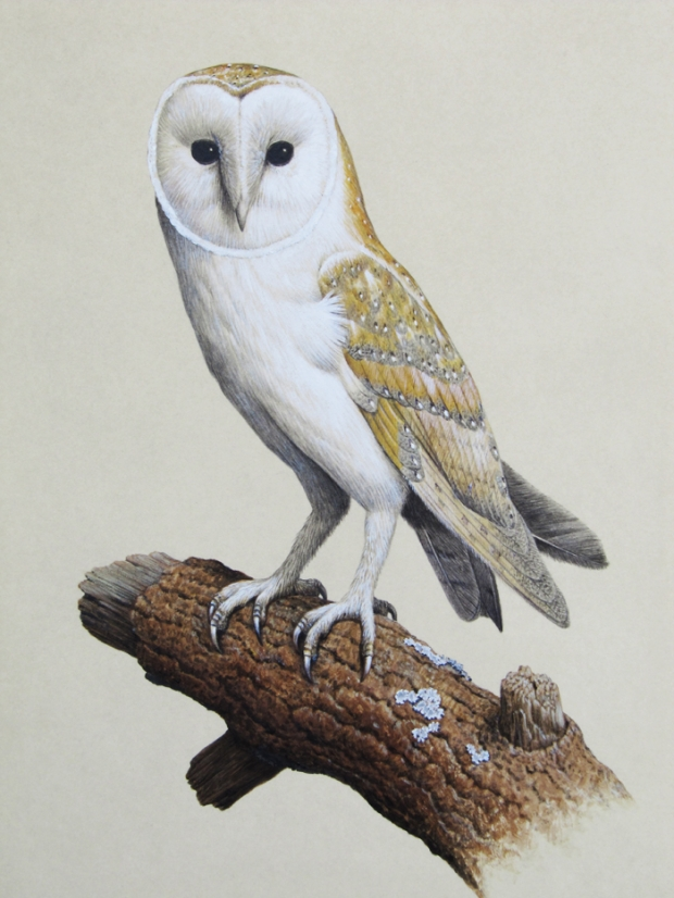 Barn Owl by Simon Turvey Image for Commission Wildlife Art blog post