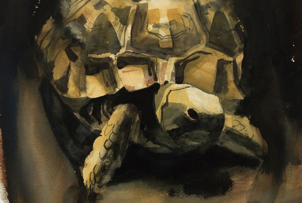 Edwards-Victoria-Egyptian-Tortoise.jpg