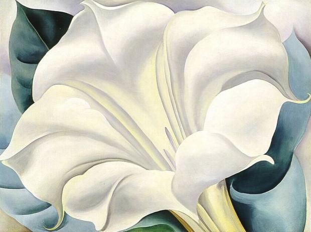 the-white-flower.jpg