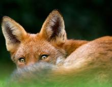 British Wildlife Photography Mall Galleries