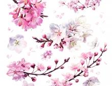 Billy Showell, Cherry blossom (detail) Square.jpg
