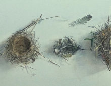 Square August-Lillias-Empty nests 31 x 94cm Watercolour by Lillias August C-1.jpg