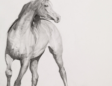 Moving Image by Emma Kennaway Equestrian and equine portraiture commissions