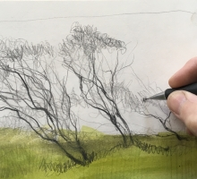 Bammeld_David_Sketchbook-trees 2.JPG