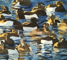 Woodhams-Ben-Tufted-Ducks.jpg