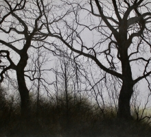 David Brammeld, Two Trees, Dancing