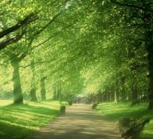 Charlie Waite, Green Park