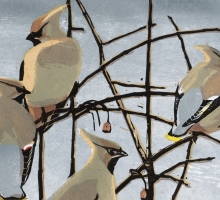 Robert Greenhalf SWLA, Waxwings