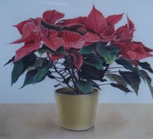 Peter Vincent, Poinsettia