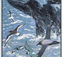Pearson-Bruce-Southern-Ocean.jpg