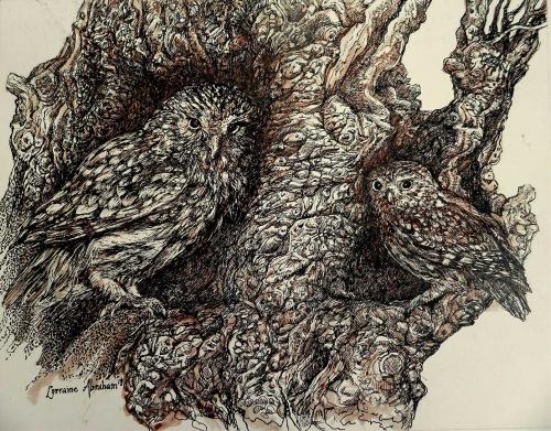 Abraham-Lorraine-The-Owls-of-Llwyn-Coed.jpg
