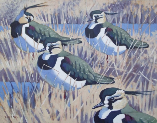 Allen-Richard-High-Tide-Lapwings.jpg