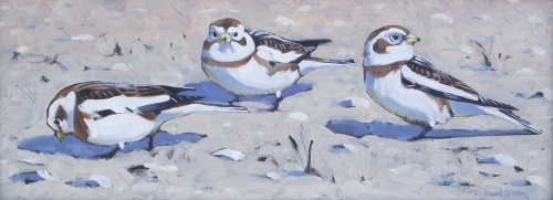 Allen-Richard-Snow-Buntings.jpg