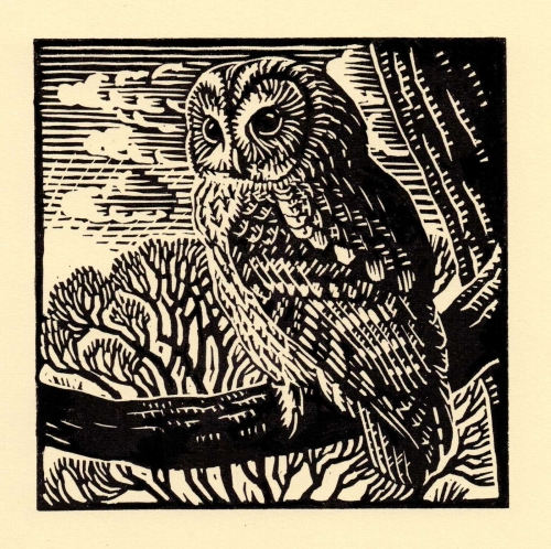 Allen-Richard-Tawny-Owl.jpg