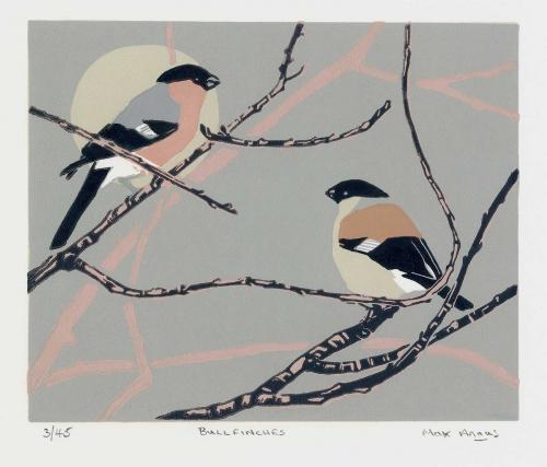 Angus-Max-Bullfinches.jpg
