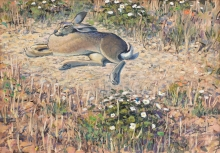 Partington-Peter-Basking-Hare.jpg