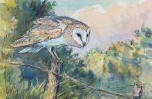 Partington-Peter-Listening-Barn-Owl.jpg