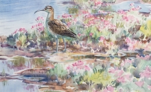 Partington-Peter-Whimbrel-in-the-Pinks.jpg