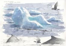 Pearson-Bruce-Humpback-whales-&-wilson's-storm-petrels,-antarctica-2.jpg