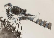 Pollard-Nick-Sparrowhawk.jpg