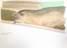 Rees-Darren-Sleeping-Elephant-Seal.jpg