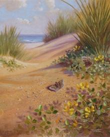 Tratt-Richard-Basking-on-the-dunes,-Dingy-Skippers-.jpg