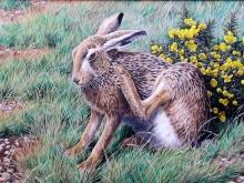Turvey-Simon-Brown-Hare.jpg