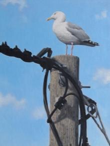 Turvey-Simon-Herring-Gull.jpg