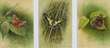 Turvey-Simon-Peacock,-Swallowtail-and-Red-Admiral-Butterflies.jpg