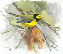 Van-Dusen-Barry-Hooded-Warbler.jpg