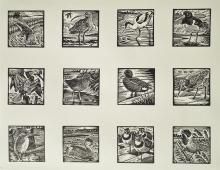 Allen-Richard-Coastal Birds.jpg