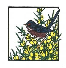 Bartlett-Vanna-Dartford Warbler.jpg